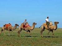 One day with camels